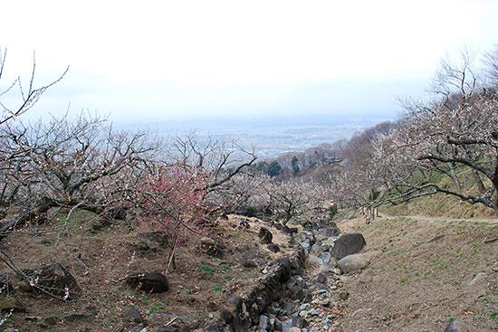 筑波山梅林