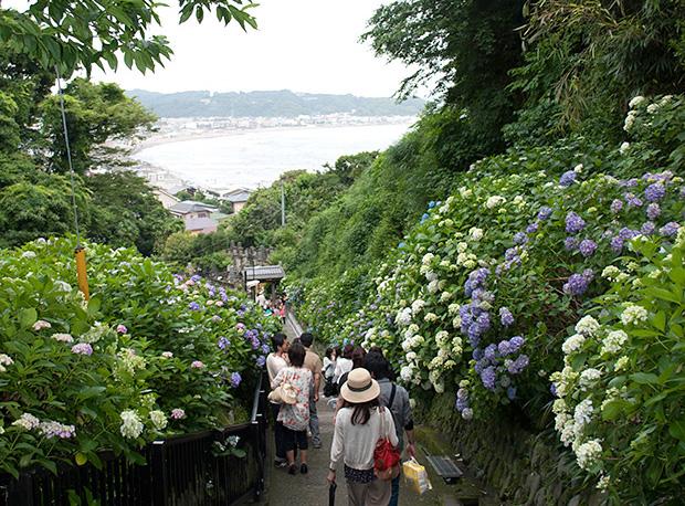 鎌倉・紫陽花の坂道