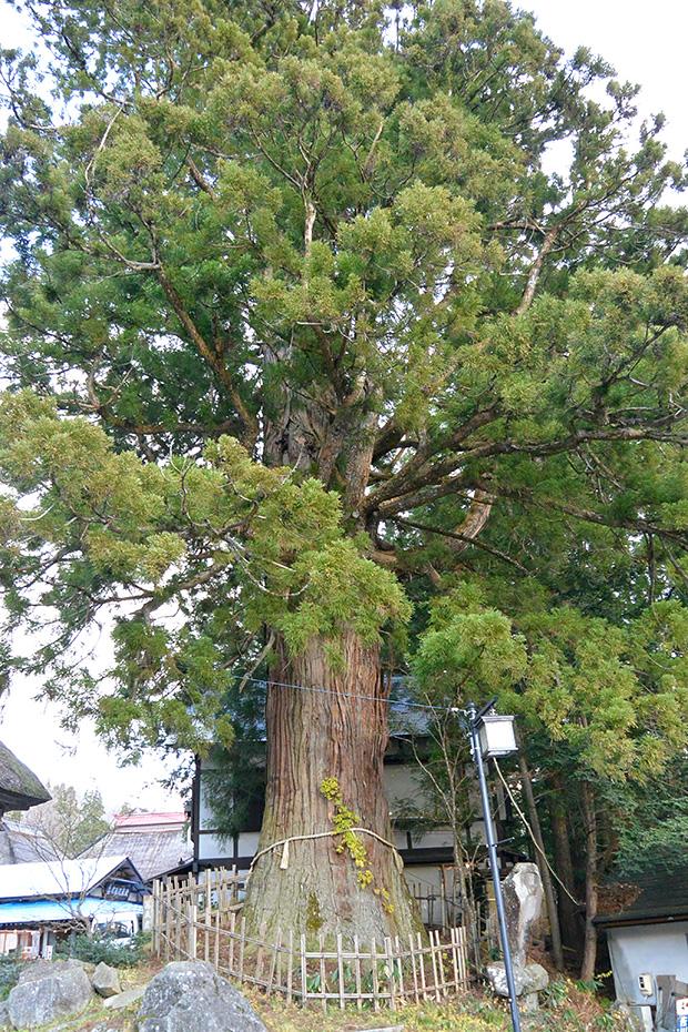 戸隠神社中社・三本杉