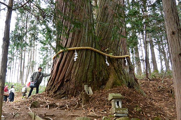 縁結びの二本杉