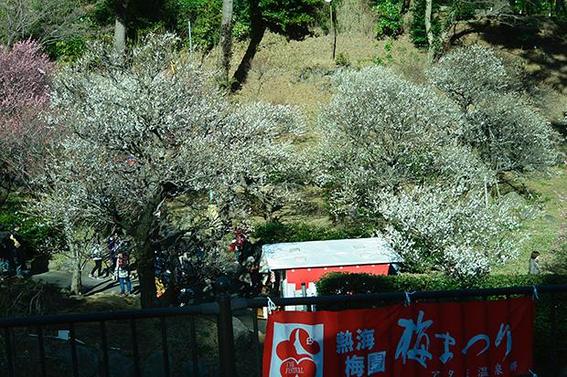 「熱海梅園」梅まつり