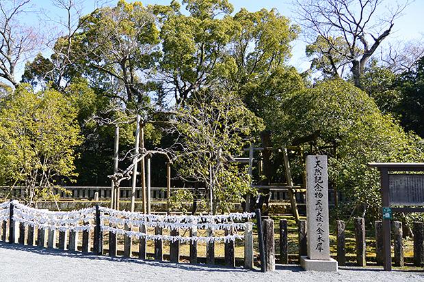 三嶋大社の金木犀