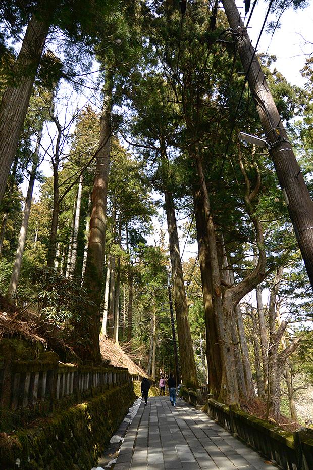 榛名神社・千本杉