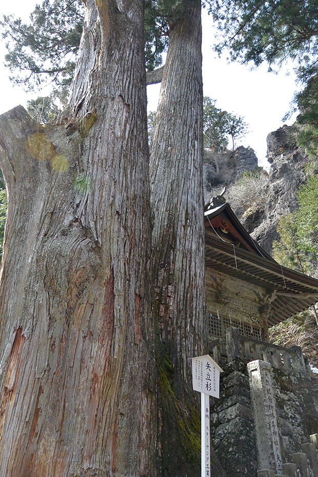 榛名神社・矢立杉