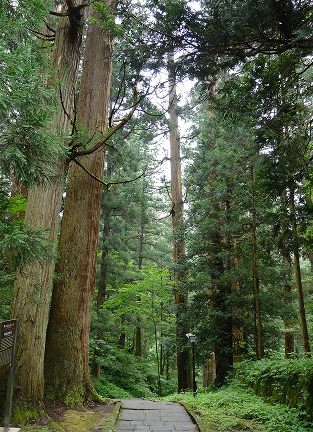 羽黒山・杉並木