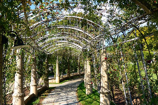 ハイジ村・日本一番長いバラの回廊