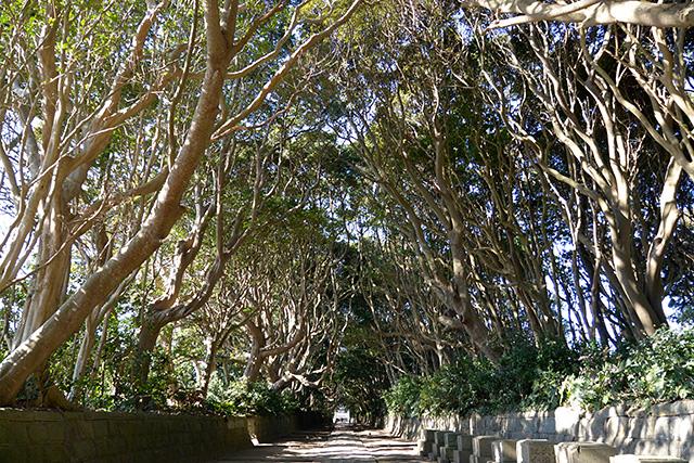 酒列磯前神社の樹々のトンネルの参道