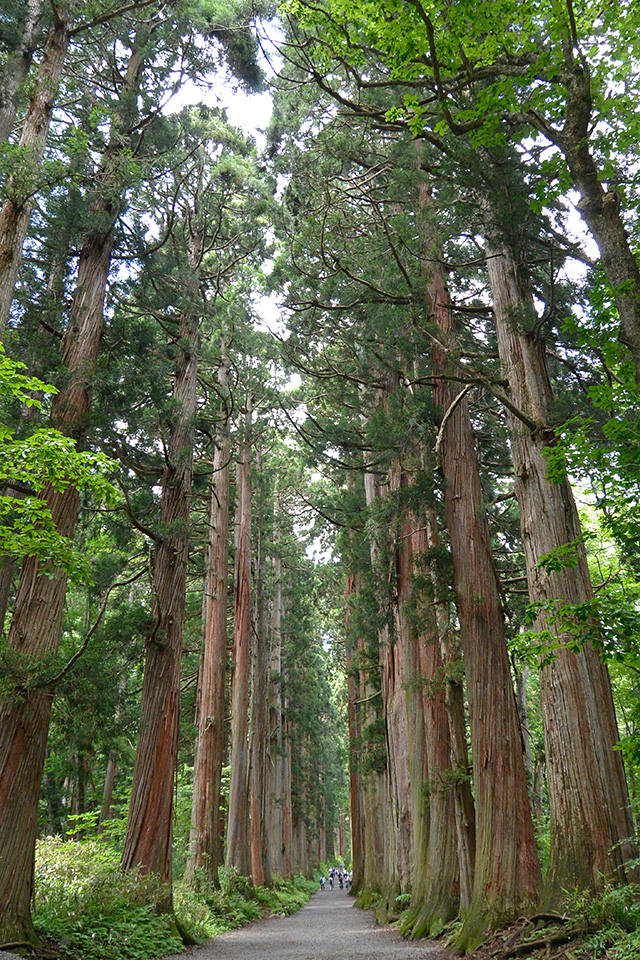 戸隠神社・奥社の杉並木