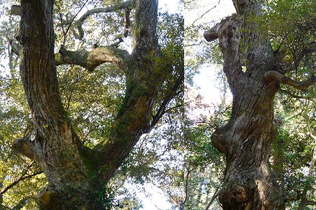 奥参道のハートの樹やシカの樹