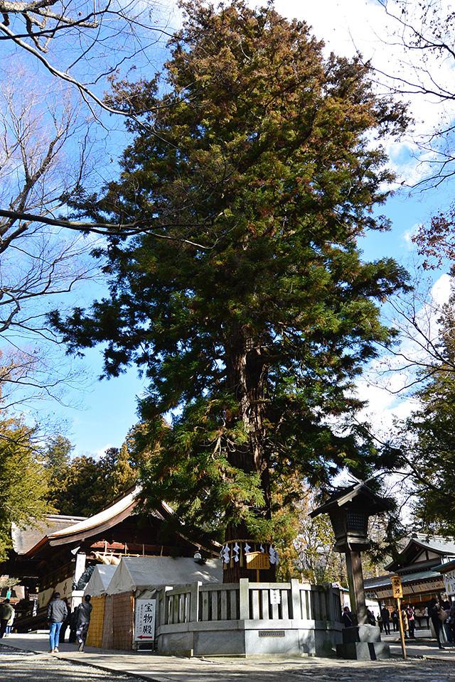 下社秋宮・寝入りの杉
